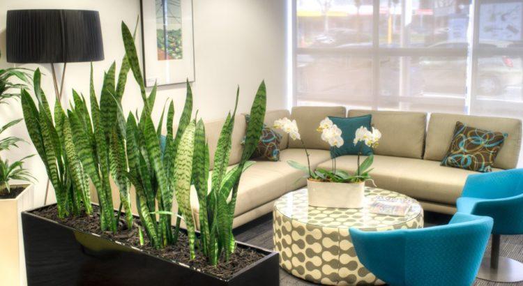 Location de plantes en entreprise - lounge