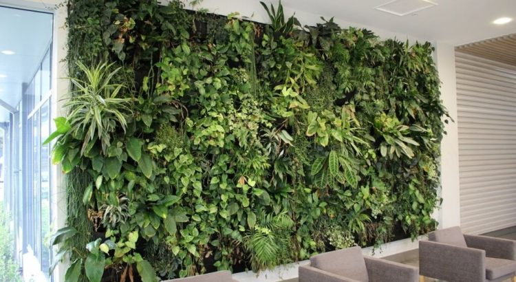 Location de plantes en entreprise - office-plant-wall