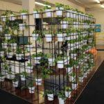 Location de plantes en entreprise - office-divider