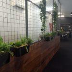 Location de plantes en entreprise - Large-Wall-Frame