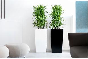 SPIRIT SERVICES est une start-up qui opère dans la location de plantes vertes pour entreprises