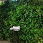 Plantes pour événementiel - bayleys-green-wall
