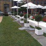Plantes pour événementiel - britomart blanc party
