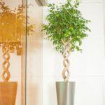 Divers décorations végétales