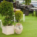Plantes pour événementiel - event lawn