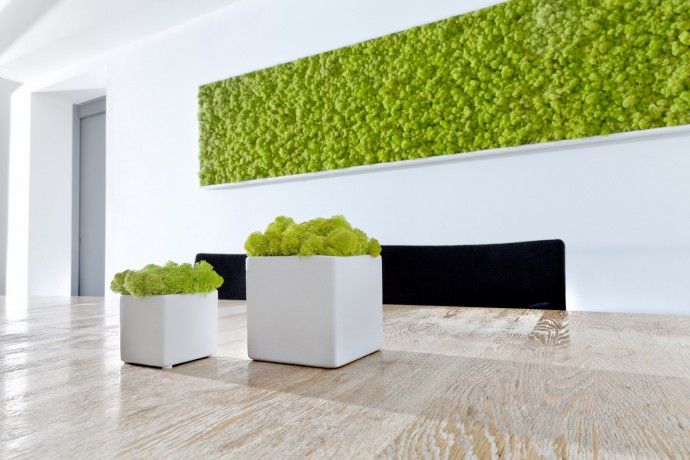 Consultez notre catalogue des tableaux et cadres vegetaux !
