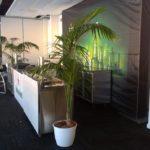 Plantes pour événementiel - pop-up-bar