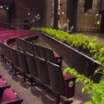 Plantes pour événementiel - stage sets