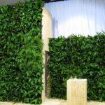 Plantes pour événementiel - temp-plantwall