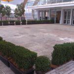 Plantes pour événementiel - temporary-courtyard