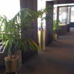 Plantes pour événementiel - vintage-entrance