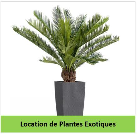 location de plantes exotiques SPIRIT Services